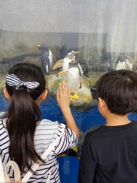 水族館の様子