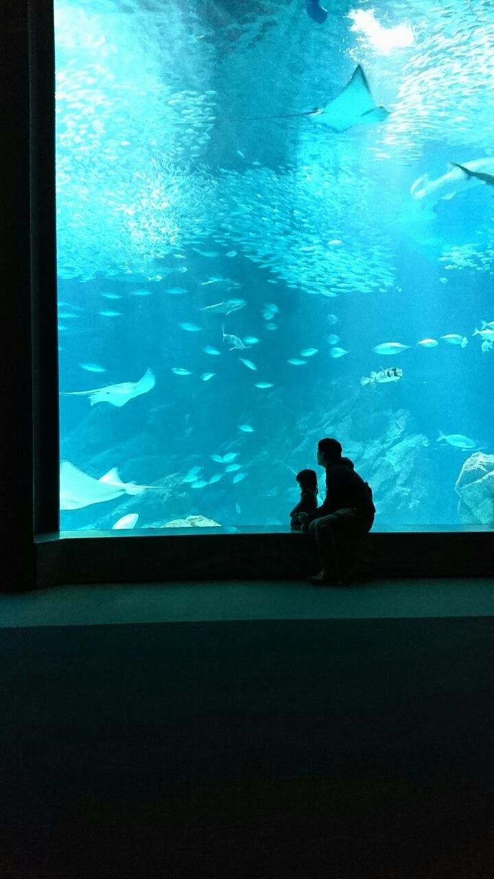 家族と水族館にて